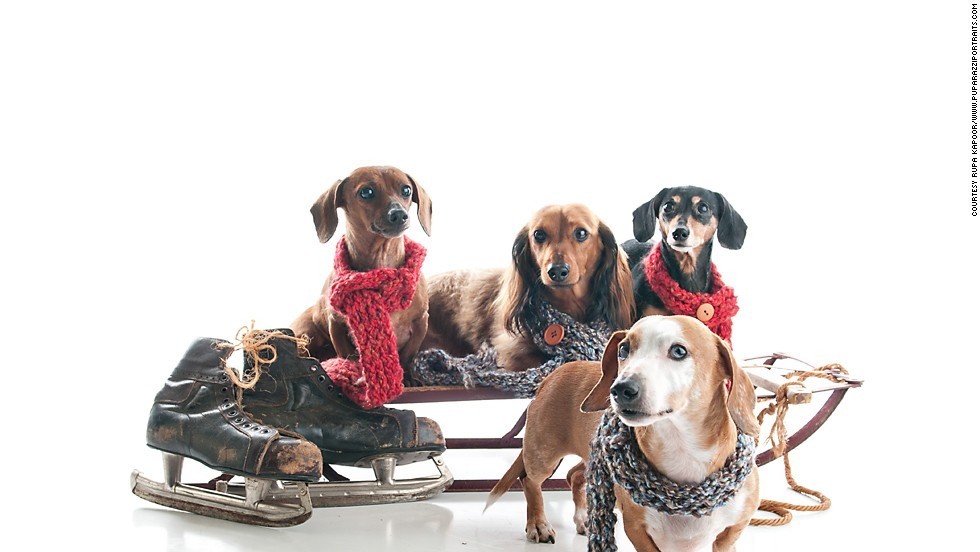 "Rupa Kapoor photographed a family of Dachshunds at her <a href=""http://www.puparazziportraits.com/"" target=""_blank"">Puparazzi Portraits</a> studio, where this sled is a recurring holiday prop."