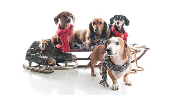 """Rupa Kapoor photographed a family of Dachshunds at her <a href=""""http://www.puparazziportraits.com/"""" target=""""_blank"""" target=""""_blank"""">Puparazzi Portraits</a> studio, where this sled is a recurring holiday prop."""
