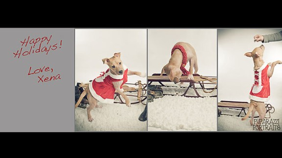 Shots from Xena the warrior puppy's Puparazzi Portraits photo session create a holiday card.