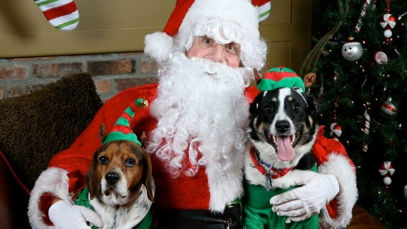 Baxter the beagle, left, and Ted the Australian shepherd mix, right, pose with Santa for Michael Ryan and Michelle Rice's holiday card.
