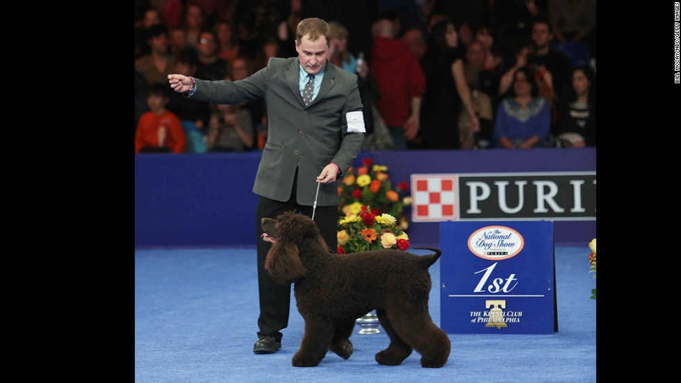 Riley, an Irish water spaniel, took the top spot for the sporting group.