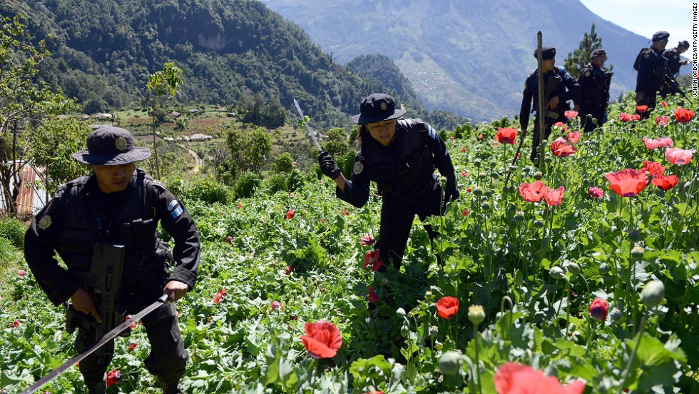 Police officers take part in an operation to destroy a poppy plantation in the 11 de Mayo village in Guatemala, near the border with Mexico, on November 29, 2013.