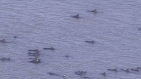 NR Zarrella Stranded Whales_00023719.jpg