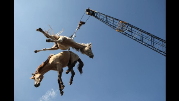 February 8: Horses are hoisted in the air by a crane as they are transferred from a cargo ship onto a truck in Surabaya, Indonesia.