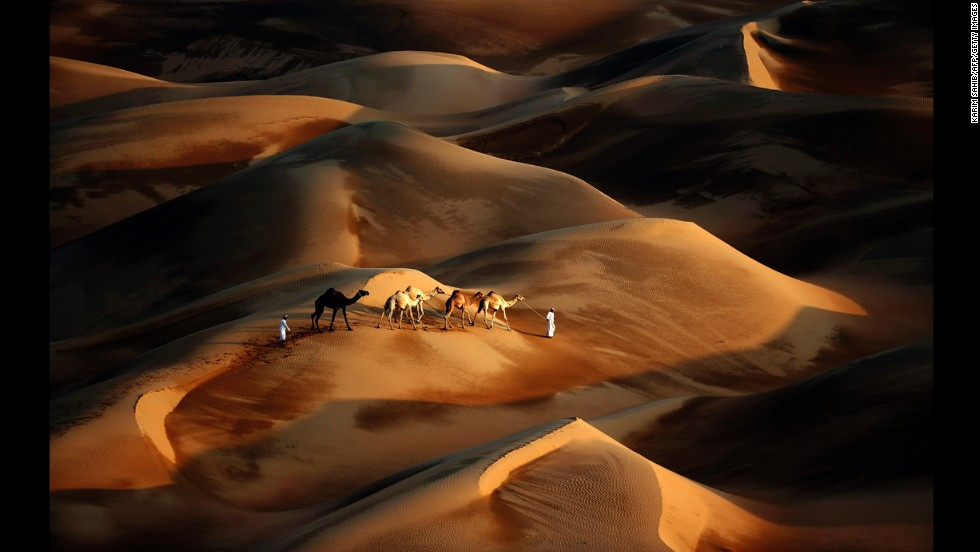 <strong>November 23:</strong> Tribesmen lead their camels through the sand dunes of the Liwa desert in Abu Dhabi, United Arab Emirates.