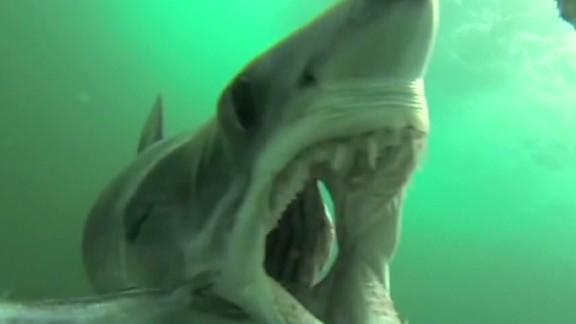 newday must see moment shark gopro feeding_00002609.jpg