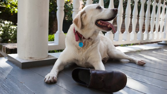 But seriously, Belle really loves her boot.