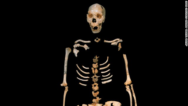 A skeleton of a Homo heidelbergensis representative from a cave site in Spain.