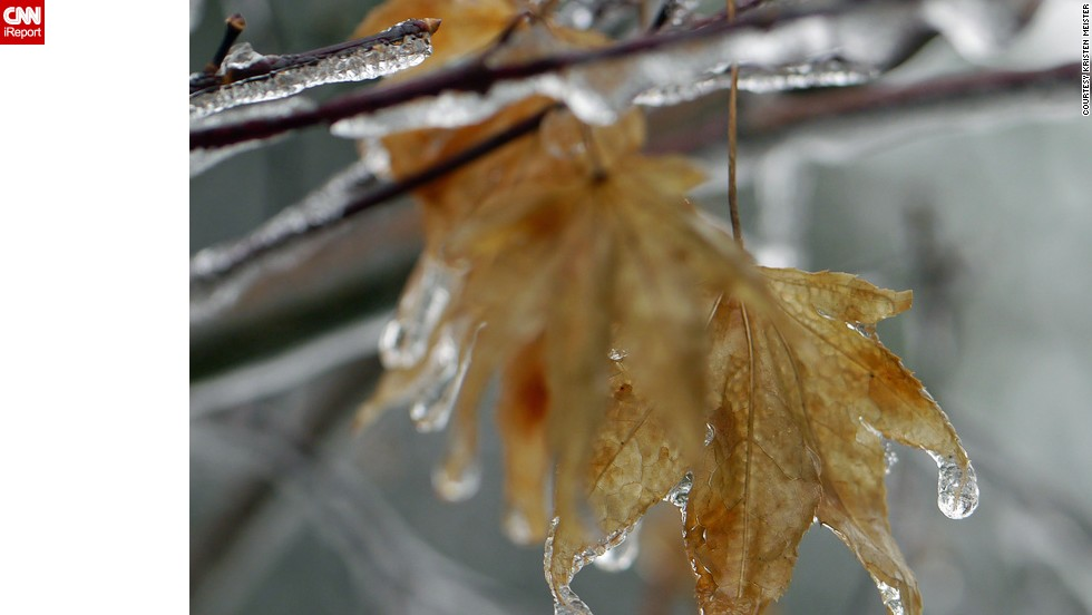 "Kristi DeCourcy experienced sleet and freezing rain for most of Sunday, and on Monday, everything was covered in ice at her home in Catawba, Virginia. The scientist ventured out in her yard to capture <a href=""http://ireport.cnn.com/docs/DOC-1067427"">up-close views of icy leaves</a> December 9."