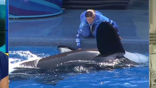More artists cancel SeaWorld concerts