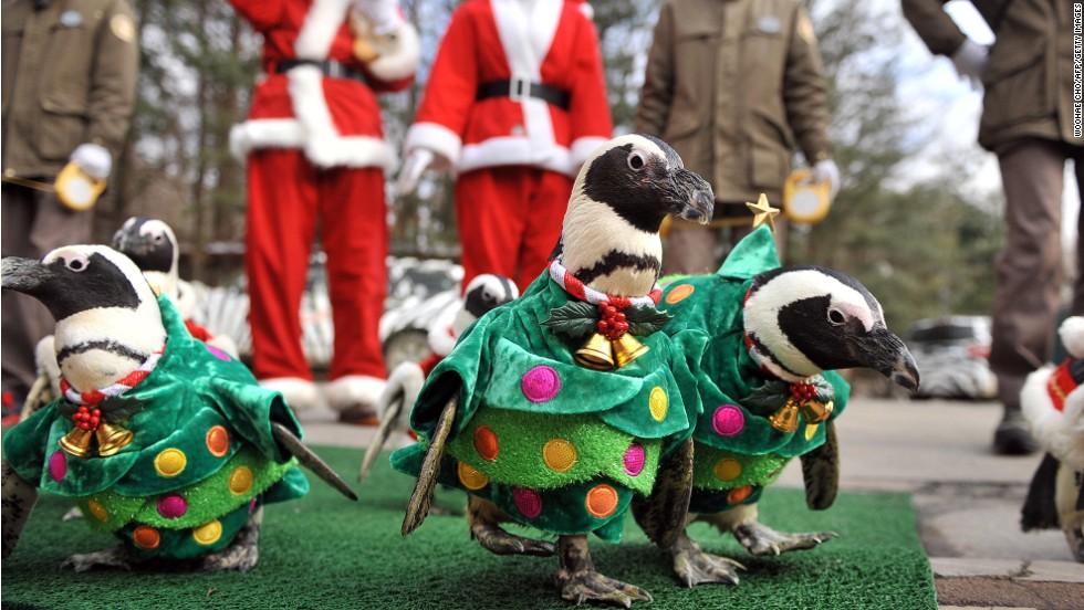 South Korea Christmas penguin march | CNN Travel