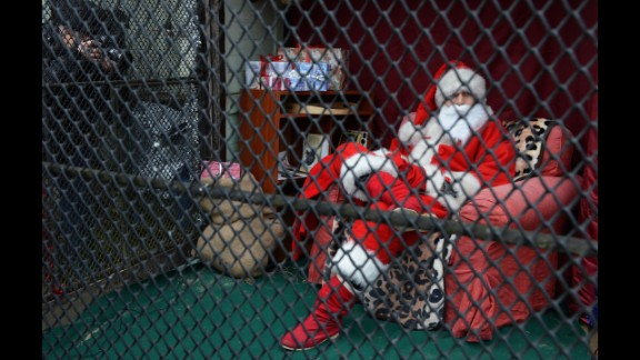 An activist dressed as Santa Claus sits in a zoo enclosure on December 19, in Prague. The activists protest against the influence of Santa Claus in Czech culture.