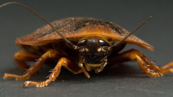 "Cockroaches: Words spoken by Senate Majority Leader Harry Reid: ""Congress is finishing this year less popular than a cockroach."" A polling question actually asked people if they have a higher opinion of Congress or cockroaches. And people thought higher of cockroaches."