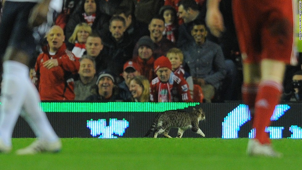 A cat hit the headlines after invading the pitch during Liverpool's game against Tottenham in February 2012.