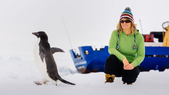 A  passenger aboard the 'stuck' ship MV Akademik Shokalskiy, watches as an adelie penguin parades by on the ice off East Antarctica, as the ship waits to be rescued on on December 29, 2013.