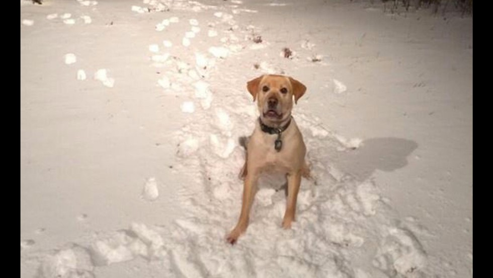 "Twitter user @Shirky3Hannan submitted this photo, writing: ""At least someone loves the snow! ""Where's my ball, mom?!"""