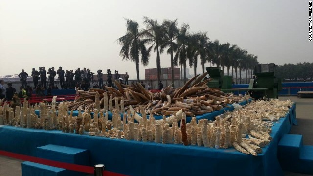 More than 6 tons of confiscated ivory, which the Chinese government destroyed in a ceremony in Guangzhou on January 6, 2014.