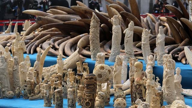 Ivory is displayed before being crushed during a public event in Dongguan, south China's Guangdong province on January 6, 2014. China crushed a pile of ivory reportedly weighing over six tonnes on January 6, in a landmark event aimed at shedding its image as a global hub for the illegal trade in African elephant tusks. CHINA OUT AFP PHOTOAFP/AFP/Getty Images
