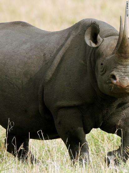 Eight endangered black rhinos die in Kenya national park