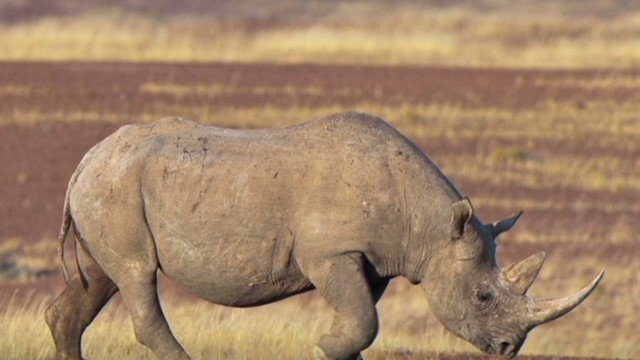 Black Rhino permit sells for $350,000