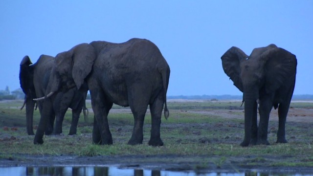 Can elephants and humans co-exist?