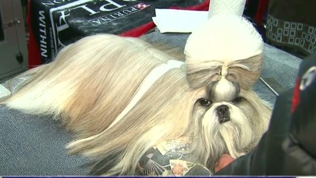 Westminster Dog Show  On Demand