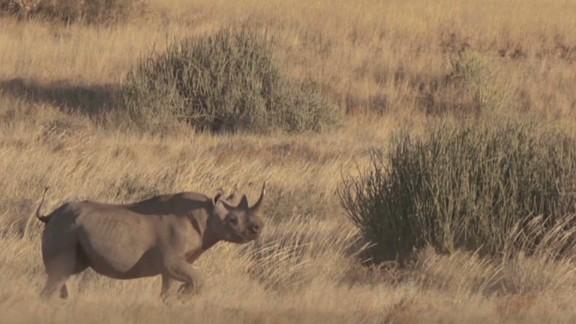 exp pmt rhino hunter corey knowlton _00002501.jpg