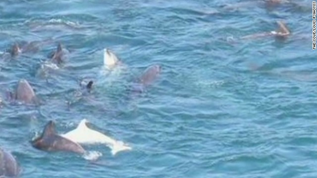 LEAD psihoyos cove dolphins documentary_00001723.jpg