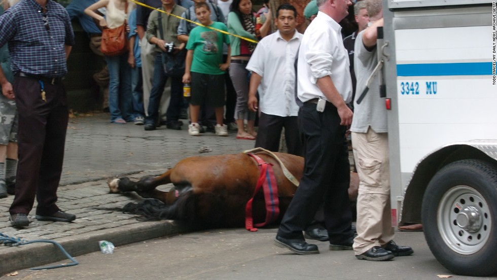 A carriage horse named Smoothie lies dead after a sudden noise made her bolt onto the sidewalk. She died of shock after she got stuck between two poles and panicked on Central Park South in September, 2007.