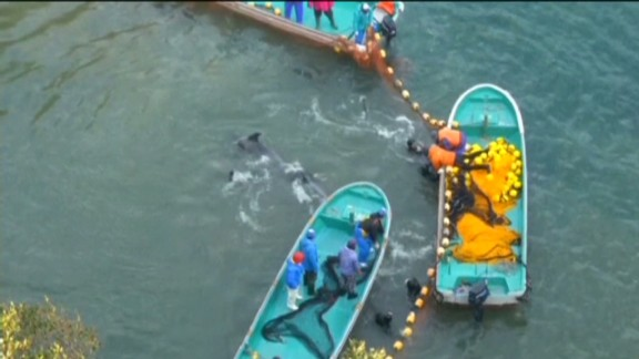 pmt dolphin slaughter the cove_00001010.jpg