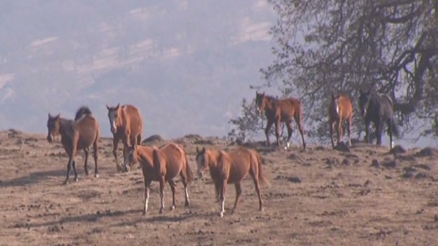 erin dnt lah california drought hurting horses_00001610.jpg