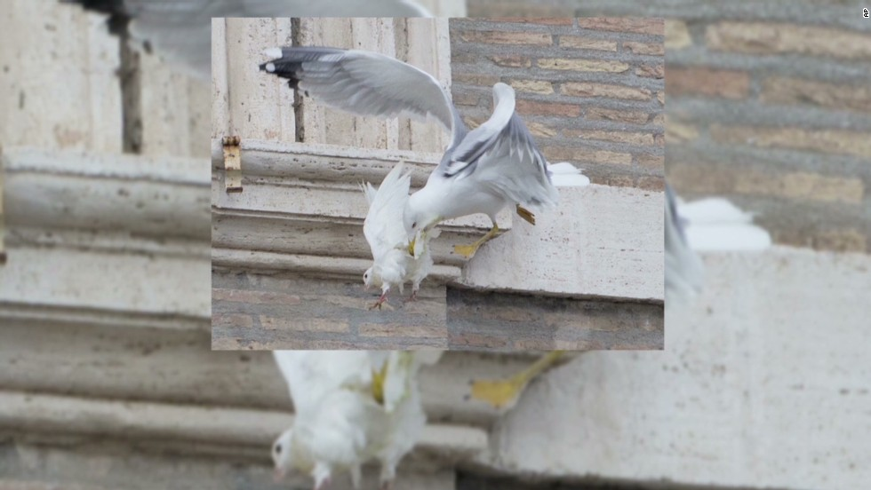 Pope's doves attacked_00001706.jpg