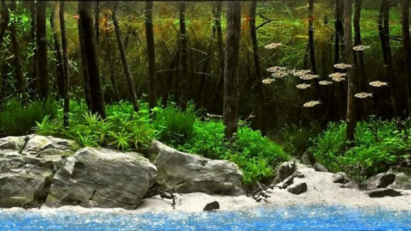 A Turkish aquascaper used five plants, including flame moss and  rotala mexicana, to create this beach scene. Catfish and rasbora in the tank swim along the faux shore.