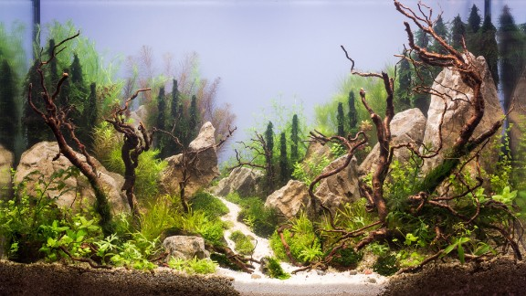 """This Russian aquarium features several large rocks. Karen Randall, a board member at the AGA, says it is important for aquascapers to think of """"hardscapes"""" around which to build their designs. """"In the terrestrial garden, the gardener usually has to think more about the natural terrain he or she has to work with,"""" she says. """"The only thing we start with is 4 glass walls."""""""