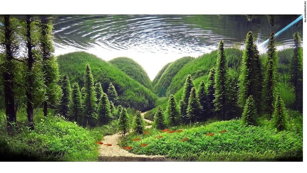 los paisajista acuticos son personas que crean paisajes submarinos mgicos en grandes peceras - Peceras Grandes