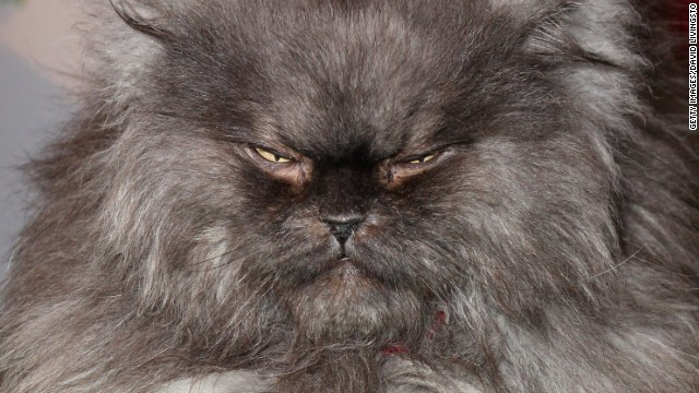 Colonel Meow: The cat. The myth. The legend. Dead at age 2.