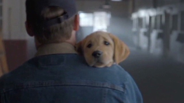 Puppies, Beckham in viral Super Bowl ads