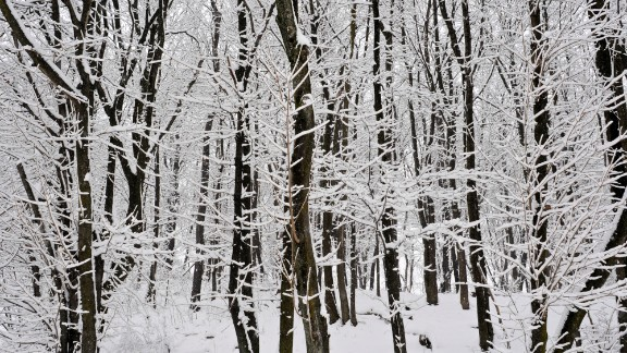 Snow covers tree branches February 3 in Pottsville, Pennsylvania.