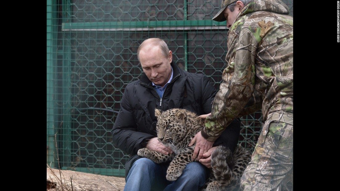 Putin holds a Persian leopard cub in February 2014 at a breeding and rehabilitation center in the Black Sea resort of Sochi. Perhaps the most important vote in Russia's public selection of a new Olympic mascot was cast when Putin said he wanted a funky leopard to represent the 2014 Sochi Winter Games.