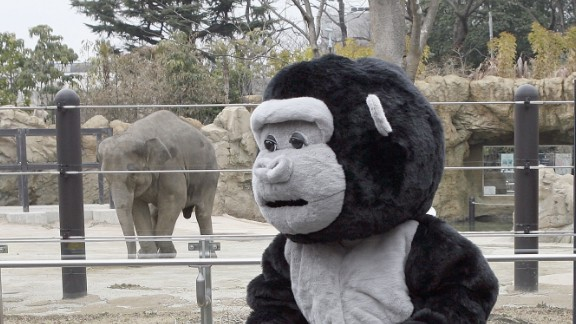"""""""I tried to feel what an animal might feel and realized when they were on the run they would be scared,"""" said zookeeper Natsumi Uno, who wore the costume."""