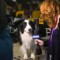 17 westminster kennel club dog show 0210