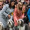 25 westminster kennel club dog show 0210