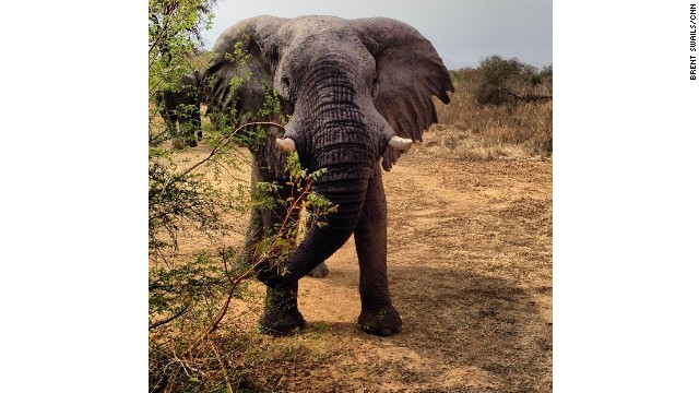 Elephants, rangers face growing threats in Chad