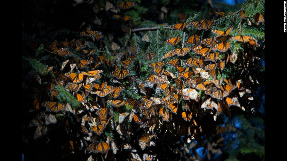 Monarch Butterfly Biosphere Reserve in El Rosario in Mexico.