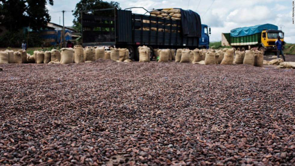 The pulp is left to ferment over several days, warming the beans and causing them to lose their bitter flavor; they are then dried out in the sun.