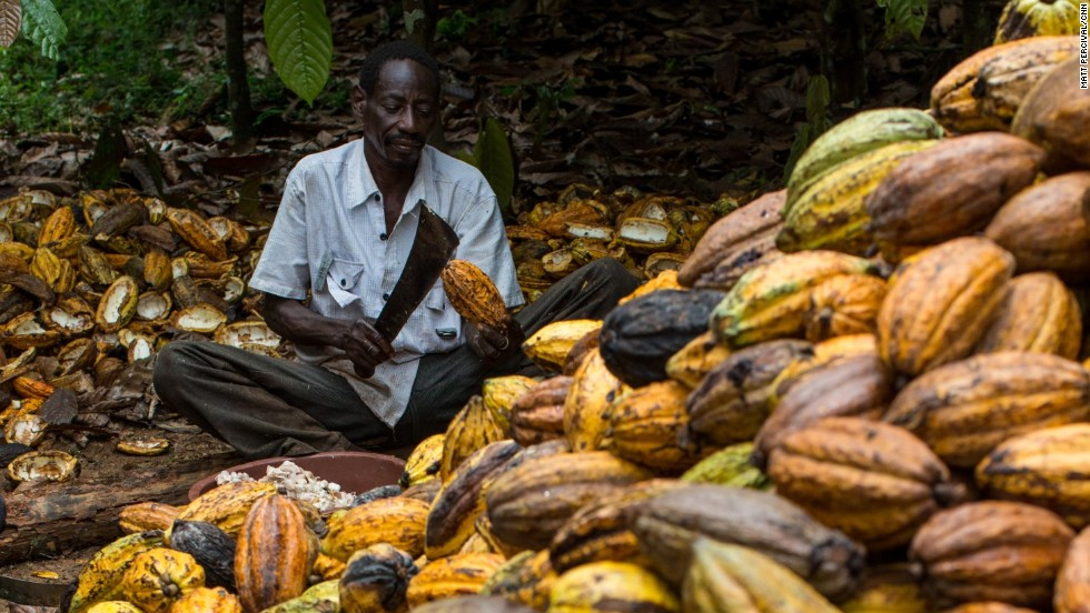 More than a third of the world's cocoa is grown in Ivory Coast, West Africa.