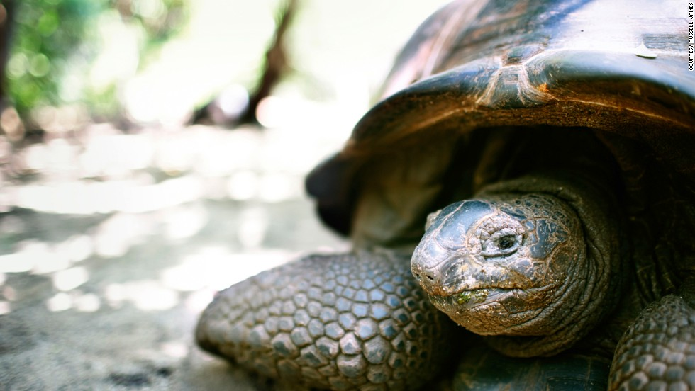 Giant tortoises, white and scarlet ibis, parrots, flamingos and rock iguanas have all been reintroduced.