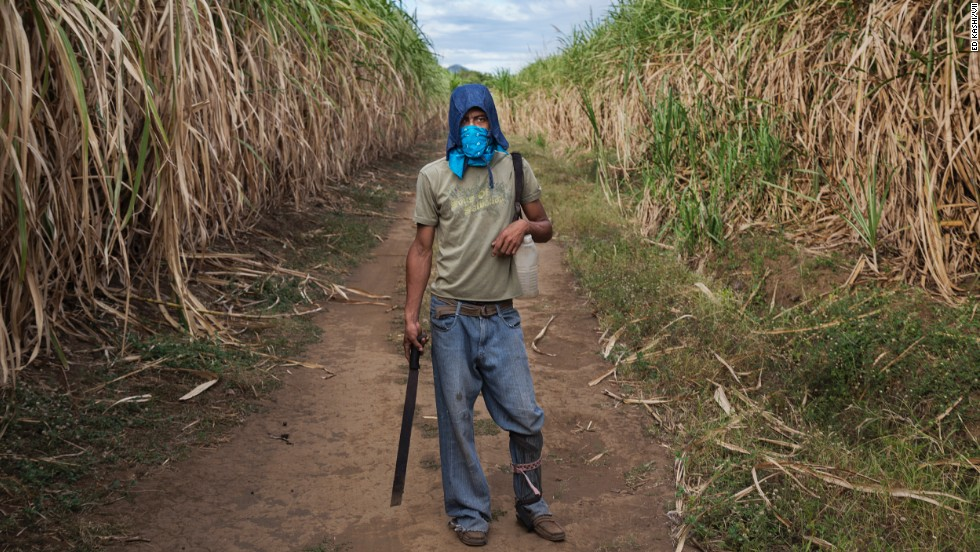 A 29-year-old sugar cane worker who suffers from kidney disease stands in the fields in Chichigalpa.