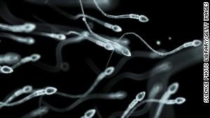 Gupta cnn sperm maturation