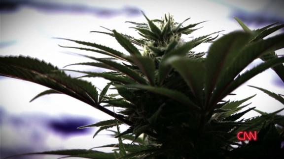 weed 2 gupta promo_00003913.jpg